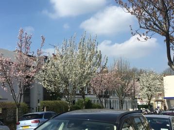 Highbury Blossom